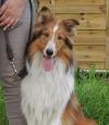 Mutterhündin Lassie