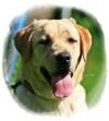 Hundemutter Valeska von der Zauberschmiede